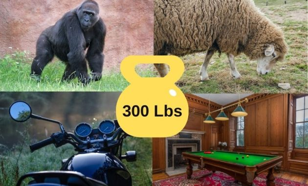 Items That Weigh 300 Pounds